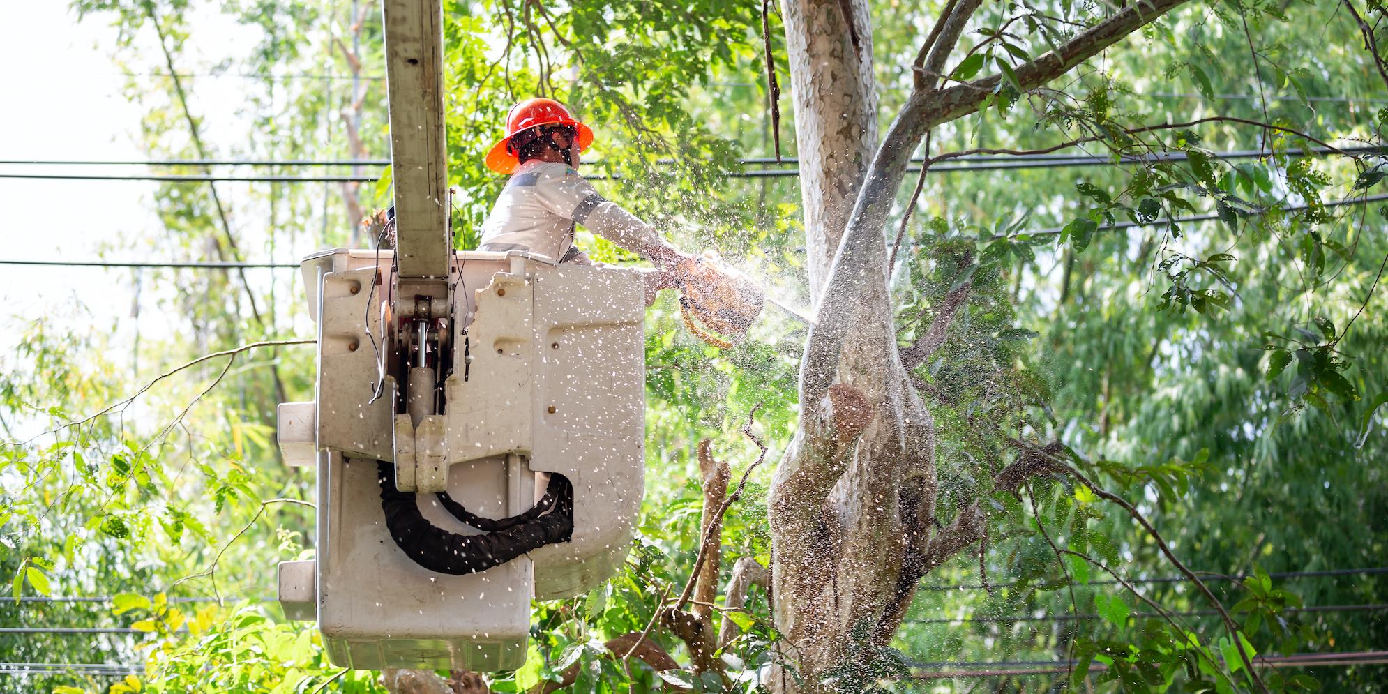 4 Pressures Utility Vegetation Managers Face